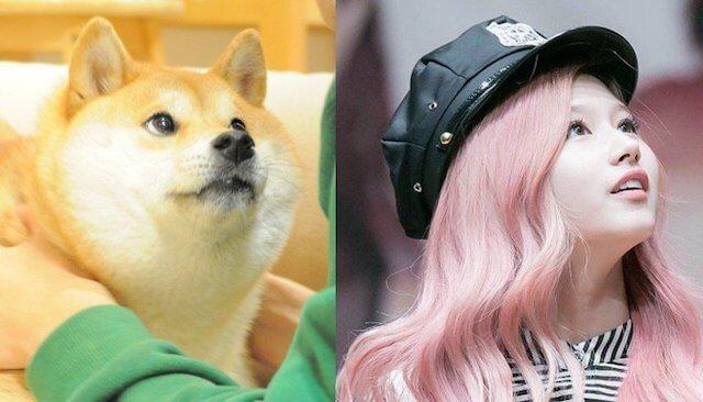 柴犬にそっくりなサナ2