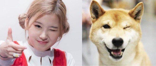 柴犬にそっくりなサナ1